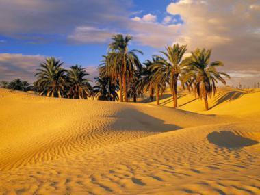 Oáza v poušti, Tunisko